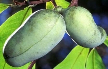 Десятка самых странных фруктов