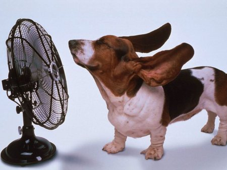 http://articles.kompass.ua/_pu/3/91404.jpg
