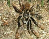 Эти удивительные пауки